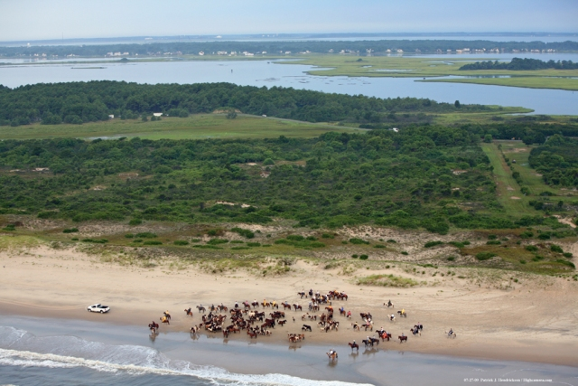 Aerial photograph of Chincoteague Ponies